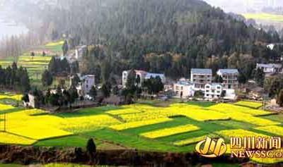 南部县首届菜花节将于3月12日在保城乡香柱山隆重开幕