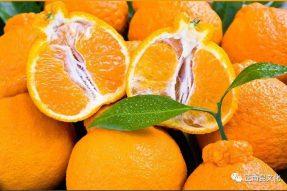 寺外桃源的橘子很甜,想给你一瓣