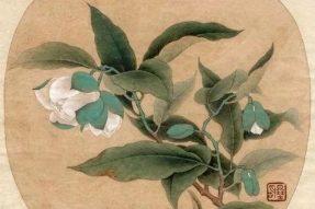 《寺外桃源讲花卉》– 春光无限,种一株山茶花吧