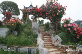 《寺外桃源讲花卉》——树状月季的百变作用