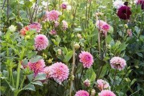 寺外桃源讲花卉 —— 认识土壤的性质