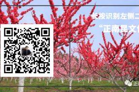 《寺外桃源讲花卉》—月季白粉病的防治